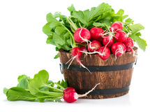 Fresh radish with green leaves in wooden bucket. On white background Stock Photos