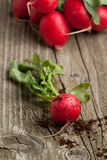 Fresh radish from ground. And bunch of fresh radishes on old wooden table Royalty Free Stock Photos
