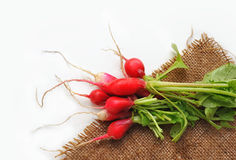 Fresh radish with haulm on sackcloth. Not. First spring harvest of vegetables. Fresh radish with haulm on sackcloth against white background. Not Stock Image
