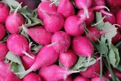 Fresh radish. Image of the background fresh red radish Royalty Free Stock Photography