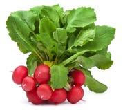 Fresh radish isolated Royalty Free Stock Photos