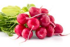 Fresh radish isolated. Close up Stock Photography