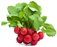 Fresh radish isolated. Over white Stock Image