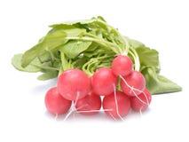Fresh radish isolated on white. Fresh radish isolated on white Royalty Free Stock Photos