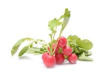 Fresh radish isolated on white. Fresh radish isolated on white Royalty Free Stock Image