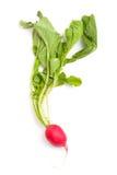 Fresh radish. Isolated on white background Royalty Free Stock Photography