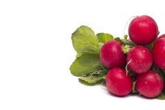Fresh radish isolated. Fresh radish  isolated on a white background Stock Photography