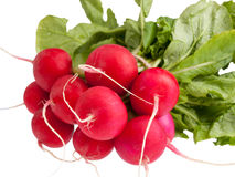Fresh radish isolated on white. Bunch of fresh radish with leaves isolated on white background Stock Photos