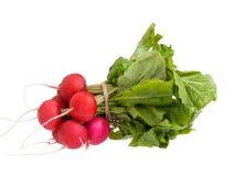 Fresh radish isolated on white. Fresh radish with green leaves isolated on white Royalty Free Stock Photos