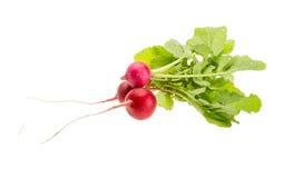 Fresh radish Royalty Free Stock Photo