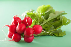 Fresh radish with leaves over green background.  Stock Images