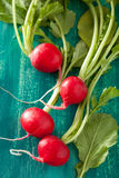 Fresh radish with leaves over green background.  Royalty Free Stock Image