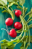 Fresh radish with leaves over green background.  Royalty Free Stock Photography