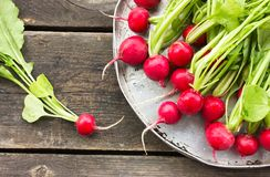 Fresh radish with leaves on a round bowl. Fresh radish with leaves Stock Images