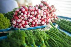 Bunch of radishes in a market. Vegetarian food. Fresh radish in the local market, healthy vegan food Stock Photos