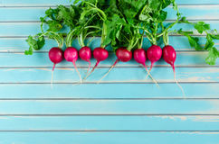 Fresh radish lying in a row on rustic wooden turquoise background Stock Photos