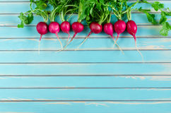 Fresh radish lying in a row on rustic wooden turquoise background Stock Image