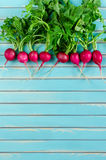 Fresh radish lying in a row on rustic wooden turquoise background Royalty Free Stock Images