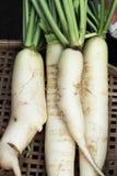 Fresh radish in the market Royalty Free Stock Image