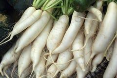 Fresh radish in the market Stock Images