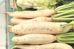 Fresh radish in the market Stock Image