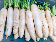 Fresh radish in the market. Stock photo Royalty Free Stock Images