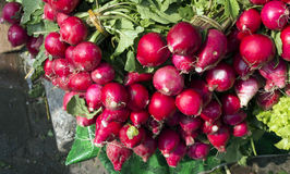 Fresh radish onion vegetable. Radish green onion pink color asian vegetables Stock Image