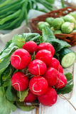 Fresh radish and other vegetables Stock Photography