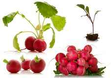 Fresh radish over a white background. Set of fresh radish over a white background Royalty Free Stock Images