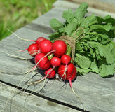 Fresh radish on planks in sunlights Royalty Free Stock Photography
