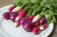Fresh radish on a plate. Raw multi-colored radish on a plate Royalty Free Stock Photos
