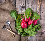 Fresh radish Stock Image