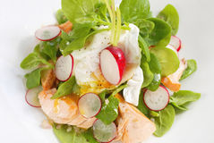 Fresh radish salad. With salmon Royalty Free Stock Photos