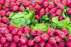 Fresh radish for sale. At a market Royalty Free Stock Photo