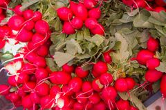 Fresh radish. For sale at a market Stock Photos