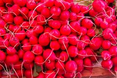 Fresh radish. For sale at a market Royalty Free Stock Photo