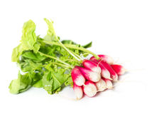 Fresh radish. See my other works in portfolio Stock Image