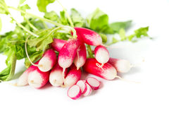 Fresh radish. See my other works in portfolio Stock Photography