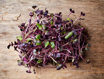 Fresh radish sprout. Isolated on wooden table, top view Stock Images