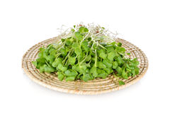Fresh radish sprouts or Kaiware Daikon on bamboo mat. With white background Royalty Free Stock Image