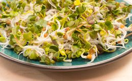 Fresh radish sprouts on a plate. The healthy diet. Close up radish sprouts on a plate Stock Photo