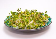 Fresh radish sprouts on a plate. The healthy diet. Close up radish sprouts on a plate Royalty Free Stock Photography