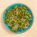 Fresh radish sprouts on a plate. The healthy diet. Close up radish sprouts on a plate Stock Image