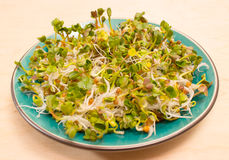 Fresh radish sprouts on a plate. The healthy diet. Close up radish sprouts on a plate Stock Images