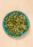 Fresh radish sprouts on a plate. The healthy diet. Close up radish sprouts on a plate Royalty Free Stock Images