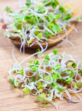 Fresh radish sprouts on a wooden background. Concept of healthy diet. Closeup - radish sprouts on a wooden background Stock Photography