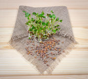 Fresh radish sprouts on a wooden background. Concept of healthy diet. Closeup - radish sprouts on a wooden background Royalty Free Stock Photography