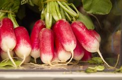 Fresh radish vegetables Stock Image