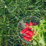Fresh radish vegetables harvest crop water washing in the garden. Outdoors Royalty Free Stock Photos