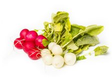 Fresh radish on white background. On white background Royalty Free Stock Photos